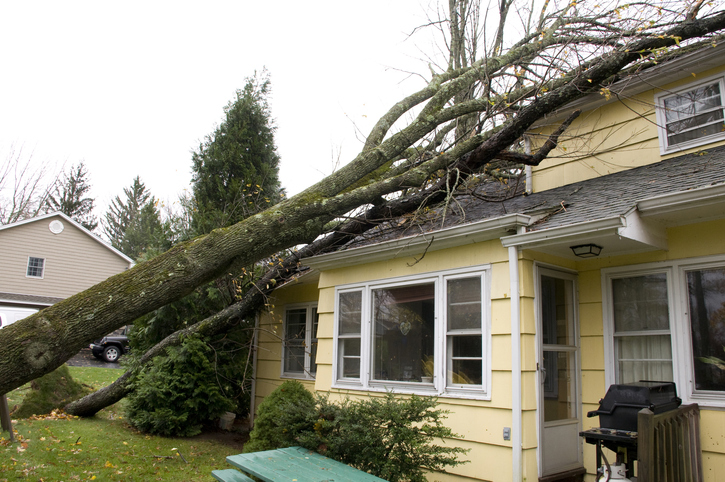 Residential home damage caused by trees falling on roof, a result of the high velocity winds of Hurricane Sandy.